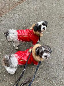 Davares on tour - 2 dogs