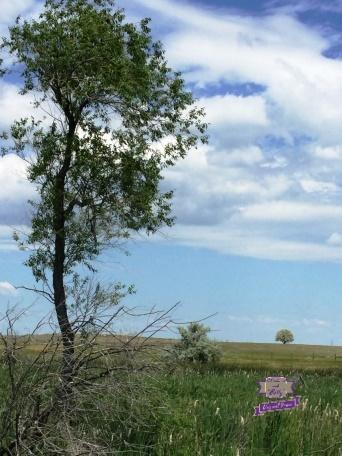 tree (Watermarked)